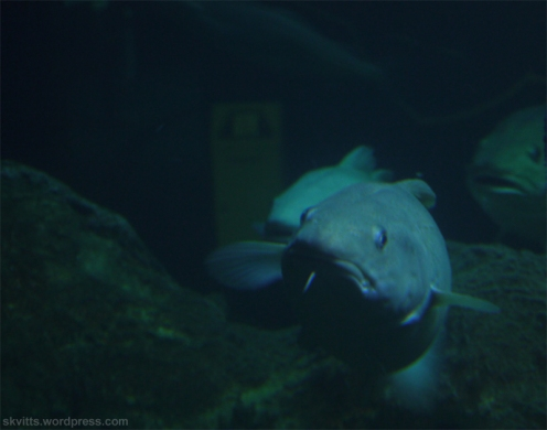Genom akvarieglaset 2
